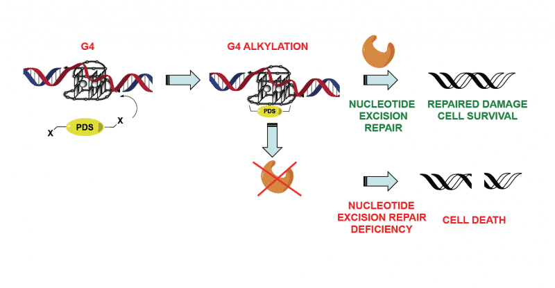 mechanism of action of steroid and peptide hormones